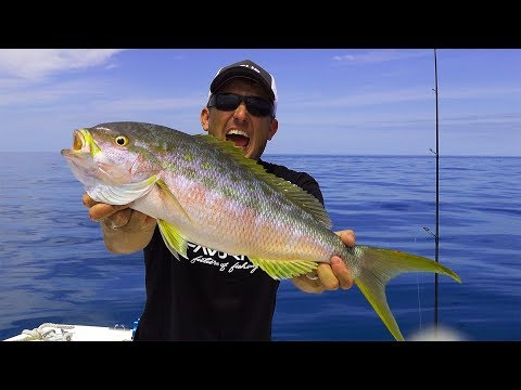 Yellowtail Snapper- Biggest I've EVER SEEN!!! (catch clean cook) Plus Monster Permit
