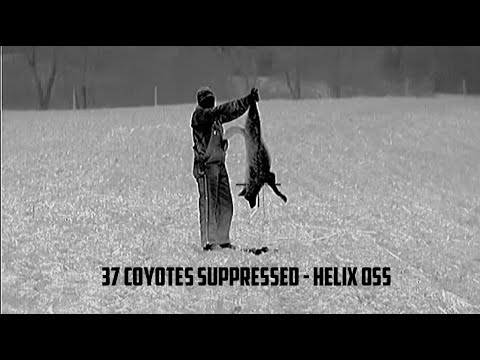 MUST WATCH: Insane Thermal Coyote Hunting Footage - Helix OSS Suppressors