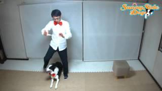 ドッグトレーナー伊藤哲朗とパートナー犬コテツの月1ドッグダンスコー...