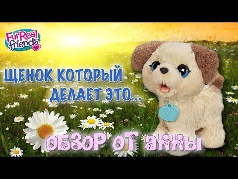 Весёлый щенок Пакс   FurReal Friends Pax, My Poopin Pup   Hasbro