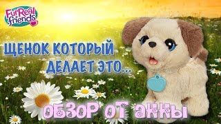 Весёлый щенок Пакс | FurReal Friends Pax, My Poopin' Pup | Hasbro
