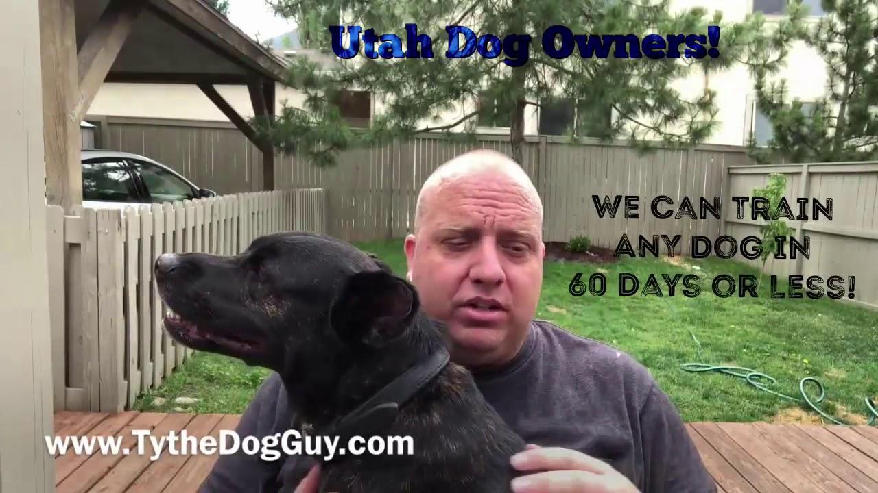 Dog Training Youtube Program