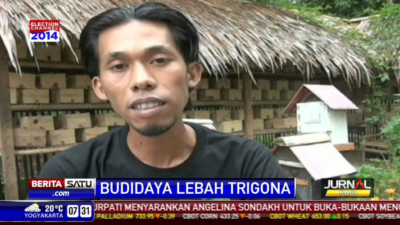 Peternak Lebah Klanceng Surabaya 082 301 85 80 82
