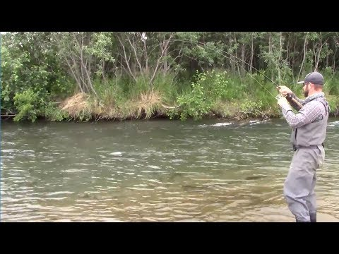 Fishing with Bears! Salmon fishing in Alaska