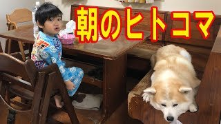 朝起きて幼稚園、小学校行く前の孫達とシェパード犬秋田犬 のんびり、ま...