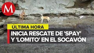Comienza rescate de perritos atrapados en el socavón de Puebla