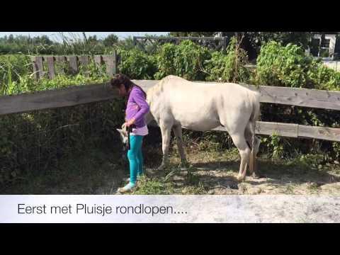 De Bonte Belevenis Assendelft.Tamara Pony Rijden Bij Bonte Belevenis Assendelft Youtube