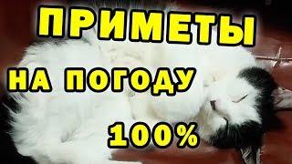 Как кошки предсказывают погоду►►Прогноз погоды►►Поведение кошек►►канал КиС Мяу мяу гав