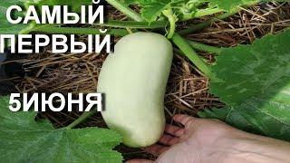 Сажаем кабачок в компост