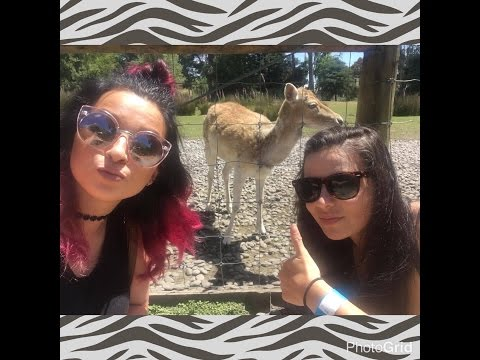 Willowbank Wildlife Reserve Zoo | New Zealand | Cerise1307 Vlog |