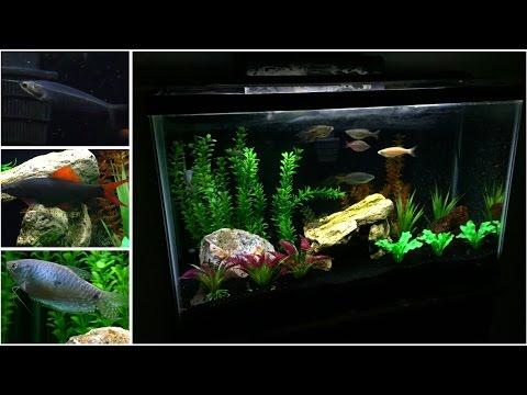 My 30 Gallon Fish Tank | (60fp) Rainbow Shark, Glass
