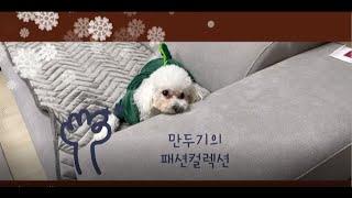 강아지 패션 컬렉션(dog's fashion c…