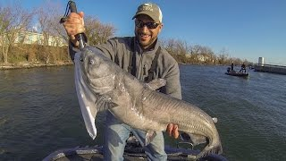 winter bass fishing potomac river big blue catfish vs 6lb test