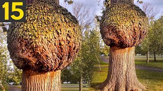 Download 15 Most Unusual Trees In The World