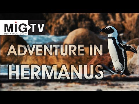 Adventure in Hermanus