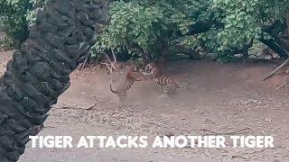 Tiger Attack Ranthambore - T98 Vs Noor's Cub - Tiger Fight