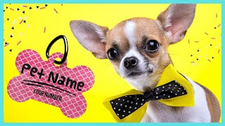 Best Unisex Dog Names