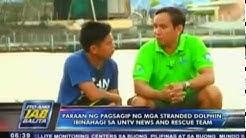 Paraan ng pagsagip ng mga stranded dolphin, ibinahagi sa UNTV News and Rescue Team