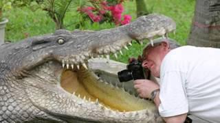 Крокодил в речке Нил   Мурзилки Int.