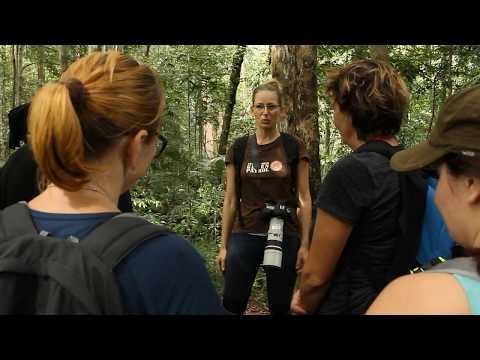 Green Life - NP Gunung Leuser, Sumatra, January 2017 (vimeo.com/221574276)