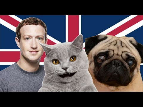 Cat News- Pugs Are too Extreme For The UK
