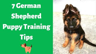 7 Best German Shepherd Puppy Training Tips | How to Train your German Shepherd puppy?