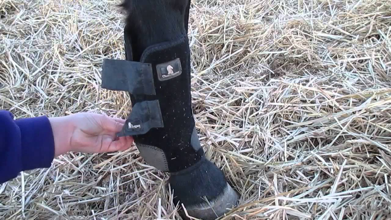 How To Put On Splint Boots Youtube