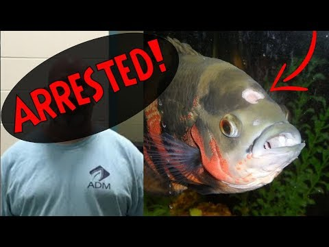 ARRESTED FOR ANIMAL CRUELTY - Hole In The Head Disease Oscar Fish