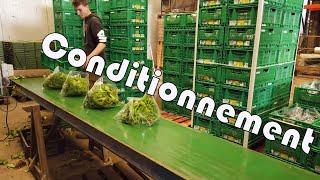 Conditionnement de nos salade en bio