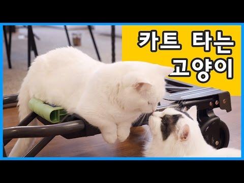 카트 타는 고양이 꼬부기