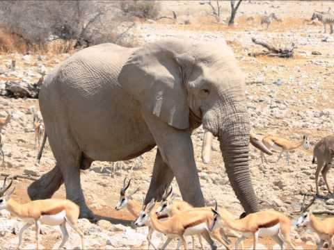 Etosha Nationalpark  September 2012