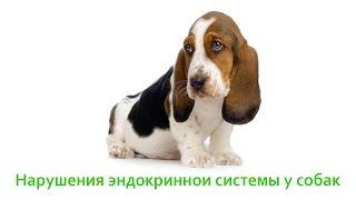 Нарушения эндокринной системы у собак. Ветеринарная клиника Био-Вет.