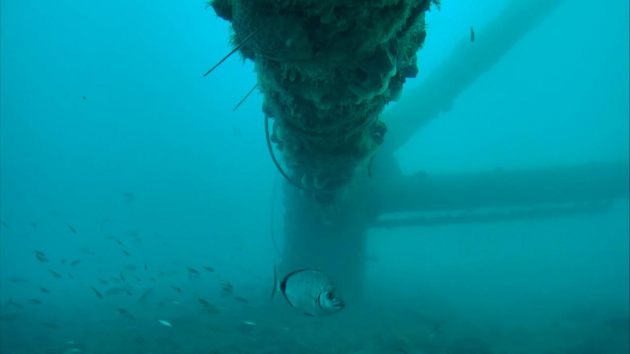 Sharks In The Atlantic Cam 03 10 2018 11 50 23 12 20 05
