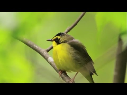 3 Minutes That Will Change Your Life, Beautiful Nature, Relaxing, Inspiring Video
