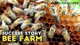 Bee Farming Success Story : Milea Bee Farming | Agribusiness Philippines