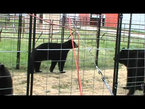 Central States Fair Rapid City Sd Fair And Bears Youtube