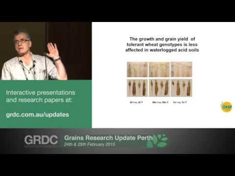 Agribusiness Crop Updates 2015 | Perth | Wheat: Increasing yield from acid soils - H. Khabaz-Saberi