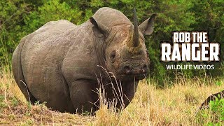 Rare Black Rhino Spotted In Kenya! | Maasai Mara Safari