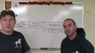 Dog Breed Behavior - Self Help Dog Training (k9-1.com)