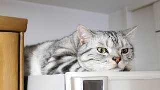 匂いが気になって、眠れない猫