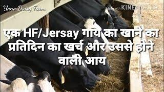 एक HF /Jersay गाय का प्रतिदिन का खाने का कितना खर्चा आता है और उससे कितना कमा सकते हैं