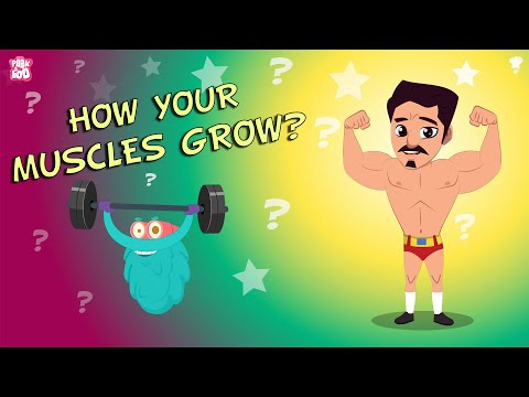 download How your MUSCLES Grow? - The Dr. Binocs Show | BEST LEARNING VIDEOS For Kids | Peekaboo Kidz