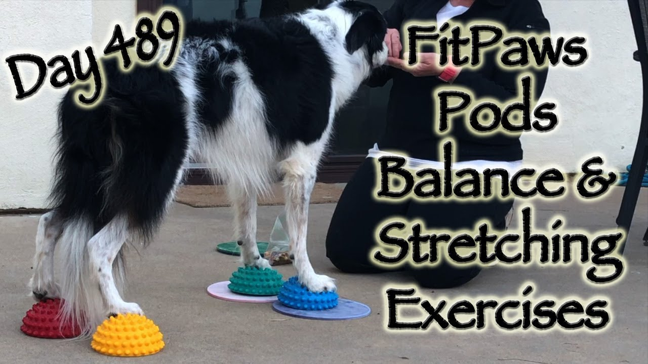 Day 489: FitPaws Pods - Balance and Stretching