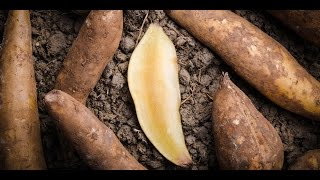 Yacon Root Vegan Extract Pills: Suppresses Appetite, Aids Digestion, Regularity, Weight Loss