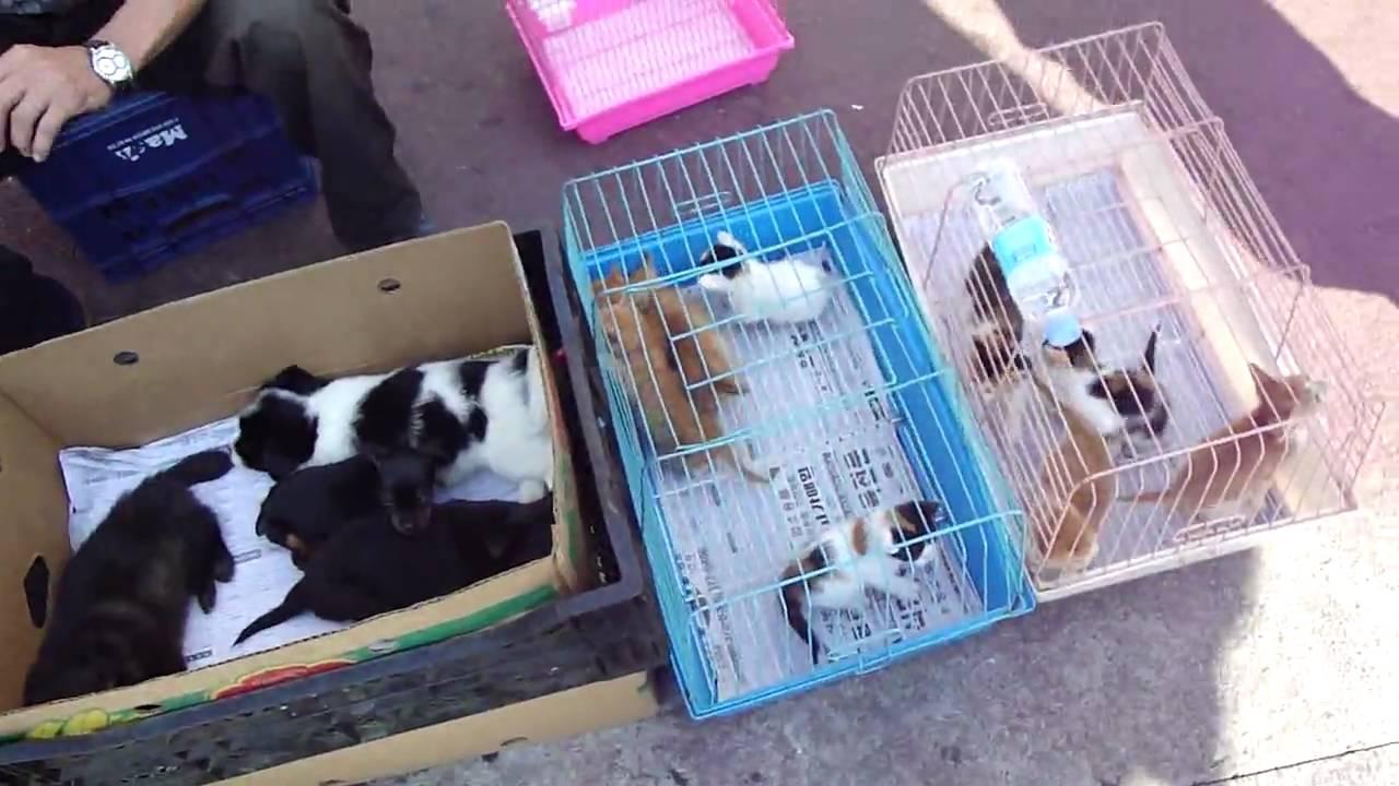 how to bring pet to korea