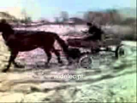 Arklio driftas
