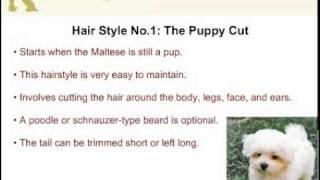 Maltese Hair Styles