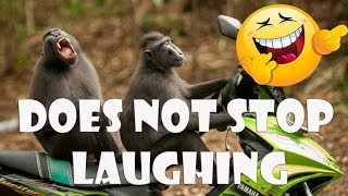 LAUGHING VIDEOS (FUNNY ANIMALS)