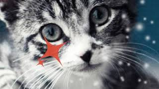 Коты вперёд)))