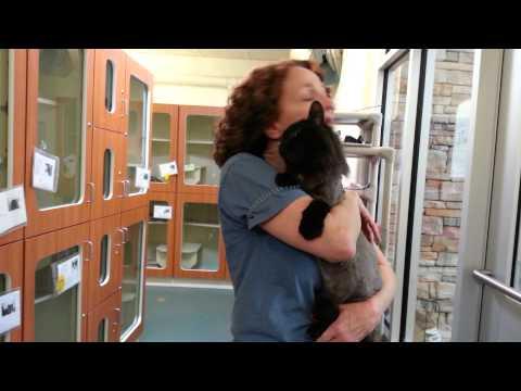 Fairfax County Animal Shelter, Thriller